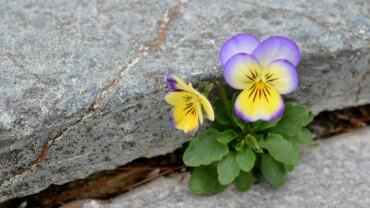Resilience Zorluklarla Başa Çıkmanın Değeri