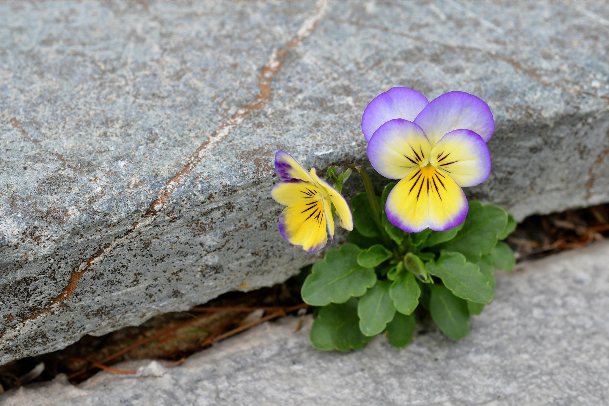 Resilience: Zorluklarla Başa Çıkmanın Değeri